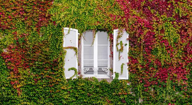 Sehr Fenstersanierung oder Fenstertausch? Checkliste und Kosten YY46