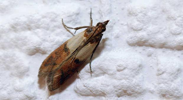 larven in der wohnung